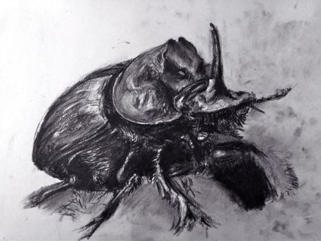 Charcoal drawing of Scarab by Barbarian-J