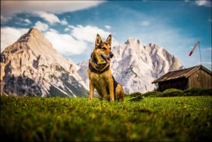 mountain dog by Nikitia1979