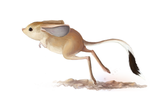 July 11:  Gobi Jerboa by e-pona