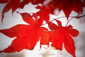 red leaves5 by firstkissfeelings