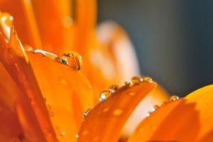 Orange drops III by sjaB