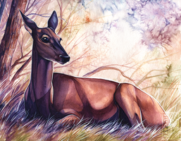 Doe Watercolour by Simkaye