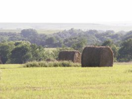 Little Bales of Hay by Taures-15