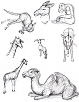 Various Animal Sketches by cmbarnes