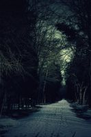 Forest IIII by AssassinM-Stock