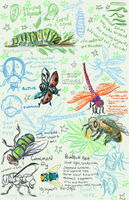 Bug Studies by labrattish