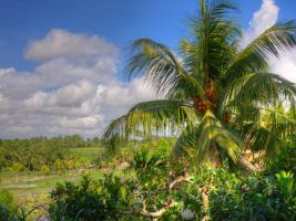 Palmtree in the fields by keks3