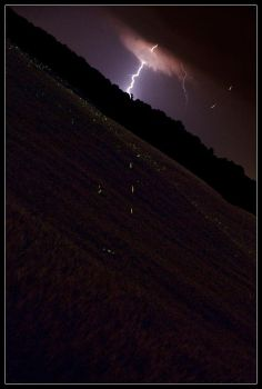 'Lightning' Bugs by ScottAlbert