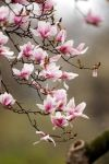 Spring Blossom 2 by Art-Photo