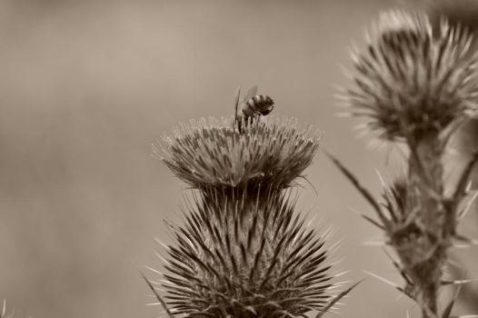Bee in sepia by JE-Rose
