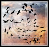 Bird Brushes III by flordelys-stock