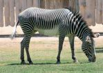 The rest of the Zebra by fatherofanartist