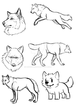 Wolf studies by Rexiehh