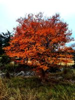 Colors Of Fall by TheGerm84