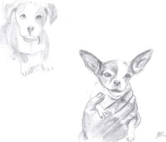 dogs by gianhet