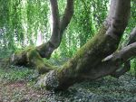 Nature 271 tree by Dreamcatcher-stock