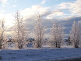 Winter In Wasilla Park 3 by justalittleknotty