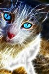 Cat Fractal by TinaLouiseUk