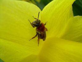 Insect close up by chanali