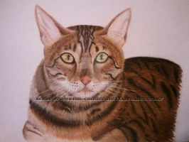 Crtique on Pastel Cat by Gneiss-chert