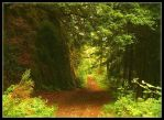 Forest Wall by Forestina-Fotos