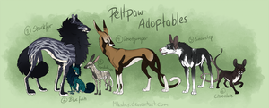 Adoptable - Peltpaw CLOSED by Mikaley