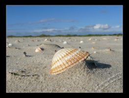 shell by albatros1
