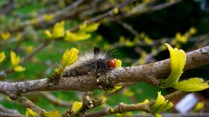 Caterpillar With Black Tuft by PamplemousseCeil