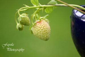 Strawberries :) by FayolaPhotography