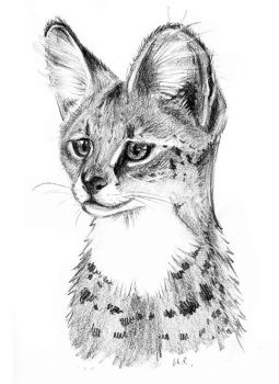 Serval by Mimose91