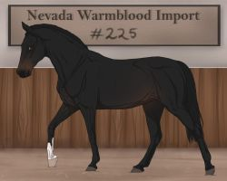Nevada Warmblood 225 by BRls-love-is-MY-Live