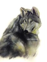 The Wolf. by nilec88