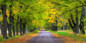 Autumn Road by PerIggbom