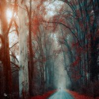 leave the road by ildiko-neer