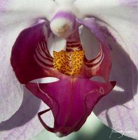 Orchid by ricardsan