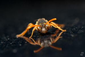 Nomada Bee by gmwebs