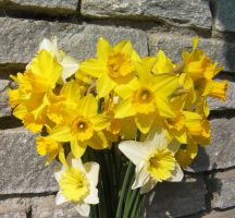 narcissus by paolaquasar
