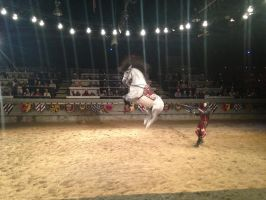 Medieval Times and their Talented Horses by PaparazziSecret