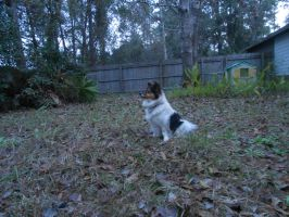 king of the backyard by Colliequest