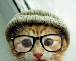 Hipster Kitteh! by AYBProductions