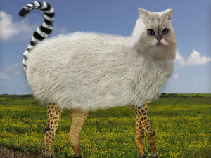New Creature Discoverd: the Cashlemurgi