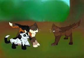What you doing here by RockpeltThunderClan