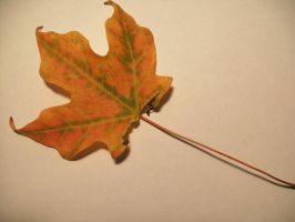 Fall Leaf-4 by Rubyfire14-Stock