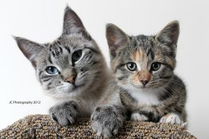 Motherly Love - A Kitten and her Surrogate by wildhorsedreams