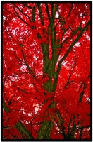 Red Maple by mikedaslim