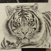 Pencil drawing Tiger by OrhideArt