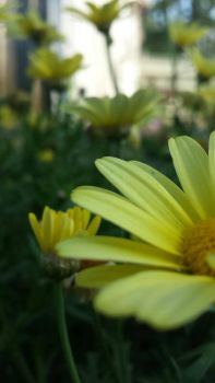Yellow by CRUG