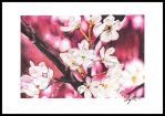 Cherry Blossoms by Taibaleigh