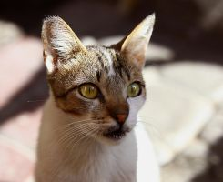 Cats of Morocco I by Nevermaketherules