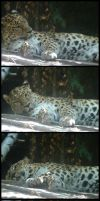 Leopard in a Photo Booth by KitsunenoTama